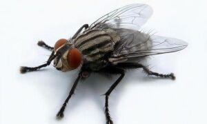 Как избавиться от мух